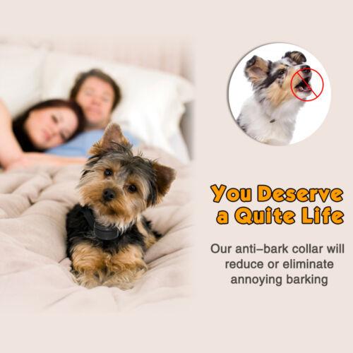 Petrainer Anti Bark Shock Dog Trainer Stop Barking Pet Training Control Collar