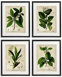 Details about Vintage Botanical Floral No  08 Art Home Wall Art Print Set  of 4 Prints UNFRAMED