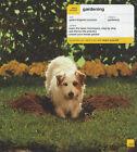 Gardening by Louise Carpenter, Jane McMorland (Paperback, 2003)