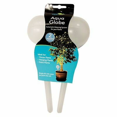 Romantisch 12 X Plant Watering Bulbs Aqua Globe Watering System For Plants Indoors Outdoors