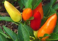 25 Sweet Pickle Pepper Seeds