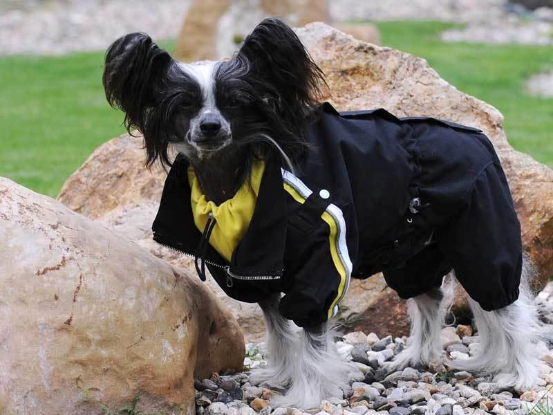 Hunde Wintermantel Schnee Anzug hochwertig 98% Wasserdicht exklusiv Dogi fashion