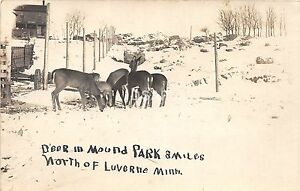 C82-Luverne-Minnesota-Mn-Real-Photo-RPPC-Postcard-c1910-Deer-in-Mound-Park