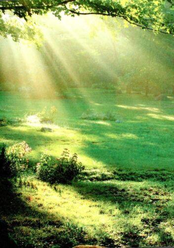 Postcard Sun rays on green field location unknown 10986