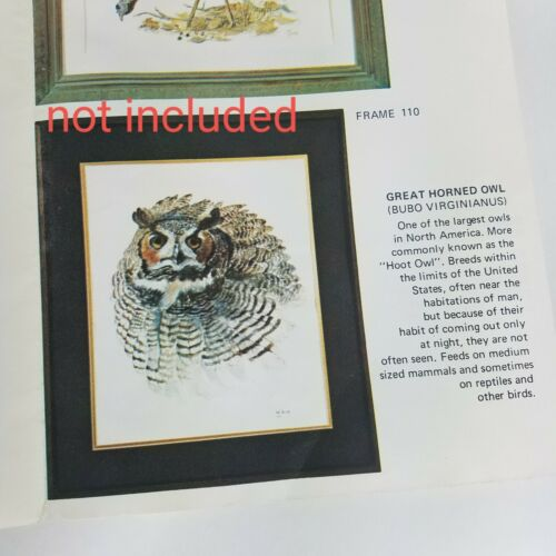 Vintage Bird Prints owl Tuck Hayward limited edition 11×8.5  watercolor numbered
