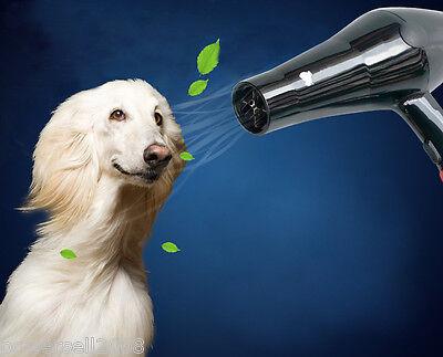 Pet Dog Grooming High Power & Speed Professional Hair Dryer Black &$