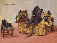 CAIRN TERRIER CHARMING DOG GREETINGS NOTE CARD THREE CUTE DOGS SMILE FOR CAMERA