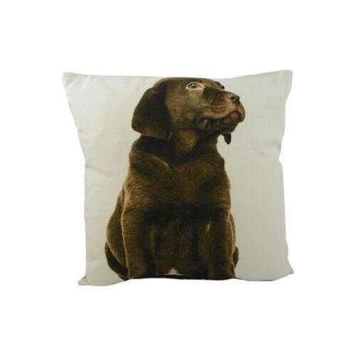 Coussin Labrador marron de Mars /& More Coussin Chien Coton 33x33cm gkkkdlb