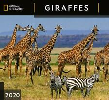GIRAFFES NATIONAL GEOGRAPHIC 2019 CALENDAR SQUARE WALL FREE UK POSTAGE