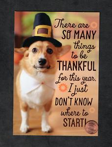 Thanksgiving Corgi Dog Puppy Pilgrim Hat Smile - Greeting ...