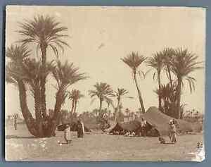 Algerie-Campement-de-bedouins-Vintage-albumen-print-Tirage-albumine-11x