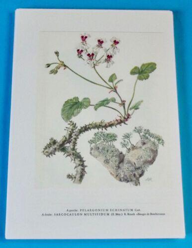 Affiche Impression Poster Plantes Grasses Bougie de Boschimans