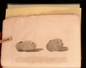 1808-Observations-on-The-Culture-and-Use-of-Potatoes-Second-Edition-Report-Illus