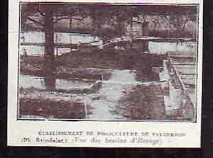 1927 -- ETABLISSEMENT PISCICULTURE VAUCHERON R701 - France - 1927 -- ETABLISSEMENT PISCICULTURE VAUCHERON R701 il ne s'agit pas d'une carte postale , mais d'un beau document paru dans la rare illustration. EN 1927 le document GARANTI D'EPOQUE est en tres bon état et présenté sur carton d'encadrement for - France