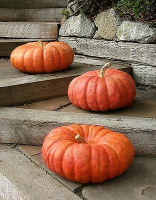 A 2g app.6 heritage French pumpkin seeds ROUGE VIF D'ETAMPES the best pumpkin