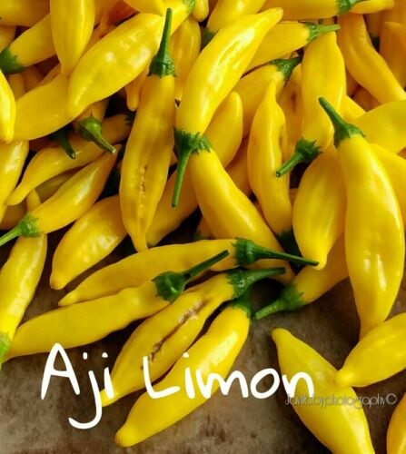25+ Aji Limon Pepper Seeds
