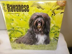 2016-16-MONTH-Wall-Calendar-039-039-PUPPY-LOVE-039-039-NEW-SEALED-FREE-S-amp-H