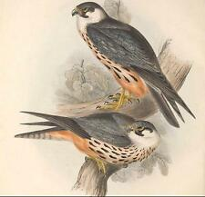 THE BIRDS OF EUROPE,BRITISH ISLES,HISTORY J.AND E.GOULD OVER 1400 COLOUR PLATES