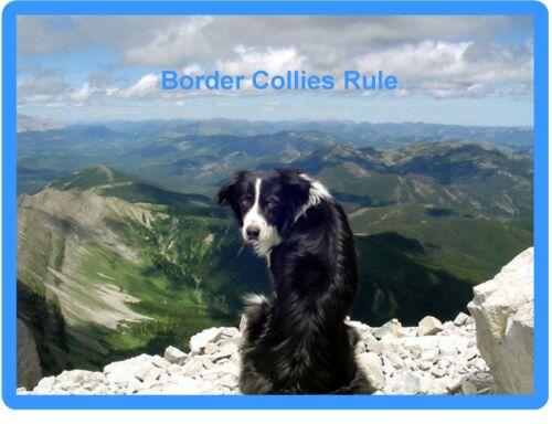 Tool Box Magnet Border Collie Dog Scene Refrigerator