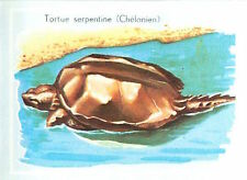 IMAGE CARD 60s Tortue serpentine Chelydra serpentina Snapping turtle Chelydridae