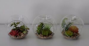 Set 3 Artificial Glass Bauble Succulent Cactus Cacti Terrarium Tea