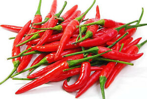 Details about 20 Thai Chili Red Long Pointy Pepper Seeds, Spicy Hot  Thailand Bird's Eye Chilli