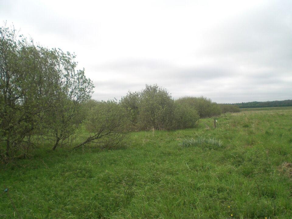 Jagtområde Hjallerup Engvej 34