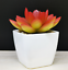 Artificial-Succulent-Plants-Small-Fake-Succulent-Bonsai-Garden-Miniature-Decor thumbnail 14