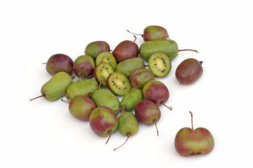 **Reichhaltige Ernte bringt die Kiwipflanze jedes Jahr im eigenen Garten.