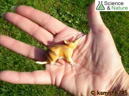 S/&n petite en plastique BANDICOOT Jouet Wild Zoo Australien Animal nouveau