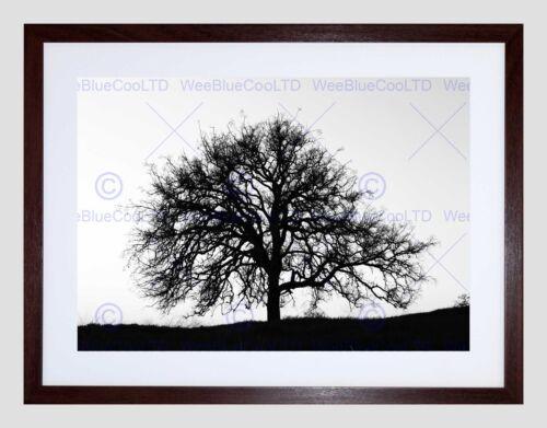 PHOTO TREE SILHOUETTE BLACK WHITE COOL STARK BLACK FRAMED ART PRINT B12X7631