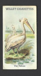 WILLS-ANIMALS-amp-BIRDS-THE-PELICAN