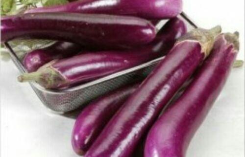 bangladais commencé aubergine Indian Lota baingon ব গ ন 150 graines brinjol