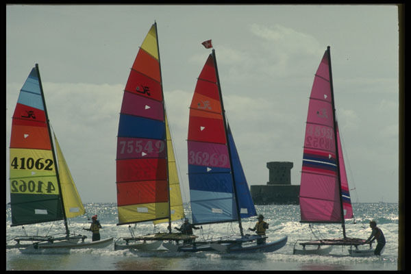 286001 Hoby Cats St Ouens Bay A4 Photo Print