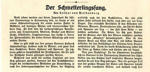 Lothar-von-Waldenberg-Der-Schmettlingsfang-Histor-Text-v-1913
