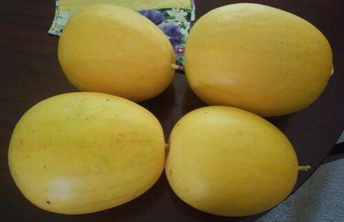 Watermelon Seeds 75 Fresh Heirloom Golden Midget Dwarf