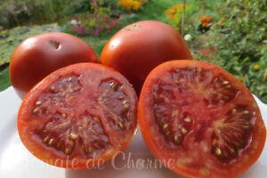 10-graines-de-tomate-rare-BARON-NOIR-heirloom-tomato-seeds-meth-bio