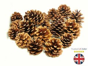 Natural-Pine-Cones-Approx-60-Per-kg-Quality-Pinecone-039-s-Florists-Crafts-Cone