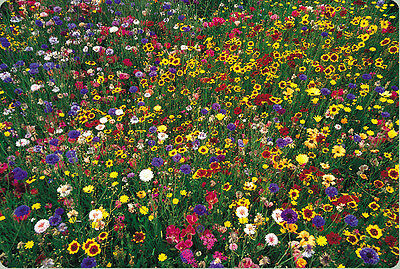 ,wildflower mix, 100% seed, 2000 SEEDS! GroCo