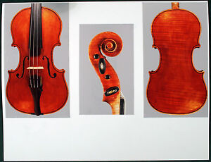 A-very-fine-Italian-violin-by-Giuseppe-Tarasconi-1899