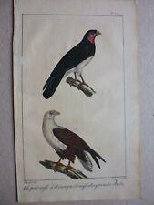 Gravure couleur 19°:Oiseaux:le petit aigle d'Amérique..l'aigle des Grandes Indes