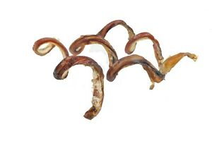 Best-Free-Range-10-034-Thick-Curly-Bully-Sticks-for-Dogs-Made-in-USA-Odor-free
