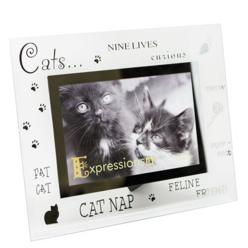 Sixtrees moments Cat 6 x 4 photo cadre photo biseauté Verre Argent Home Decor