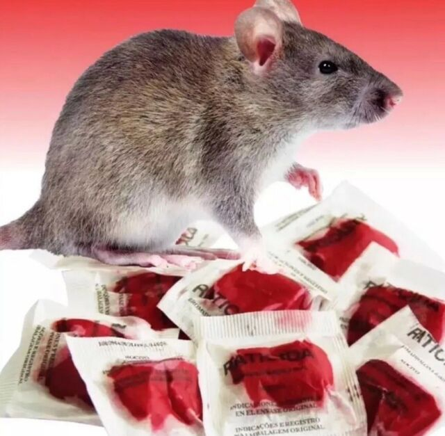 More About Best Rat And Mouse Poison