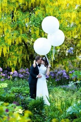 Blush Balloon 3ft giant large valentine wedding bride engaged love Best Day Ever