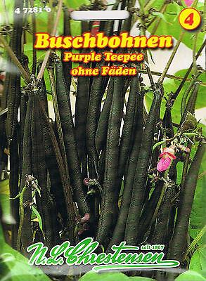 472810 Bohnen Purple Teepee blau ohne Fäden  Buschbohnen  Saatgut  Samen Gemüse