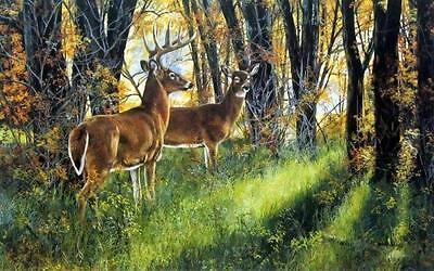 "Andrew Kiss /""Undercover  /"" Deer Buck  Art Print 12/"" x 8/"""