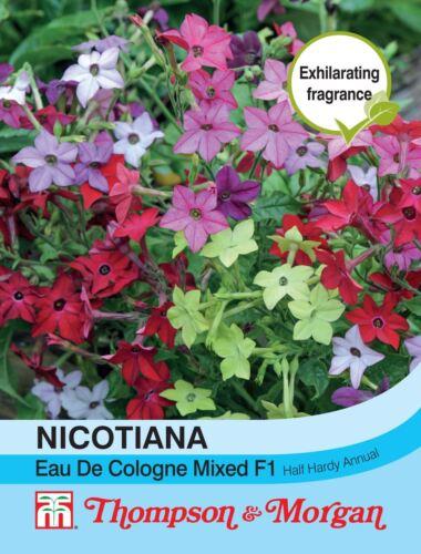 Flowers 40 Seed Nicotiana Eau De Cologne Mixed F1 Hybrid Thompson /& Morgan