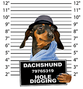 Dachshund Mug Shot Pick Your Size Hood Sweatshirt