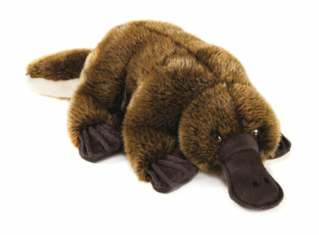 Platypus Plush - National Geographic